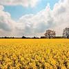 """© Emanuele Pagni Fotografer- Deutschland - Niedersachsen - """"Frühling"""""""