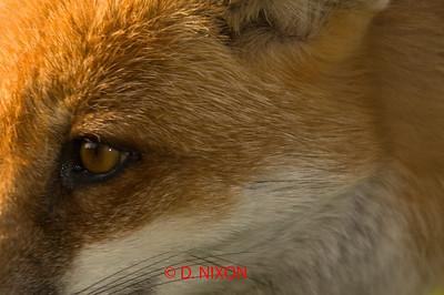 FOX 0315