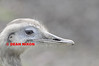 CUTE BIRD - 0368
