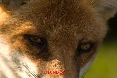 FOX 0306
