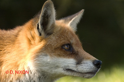 FOX 0314