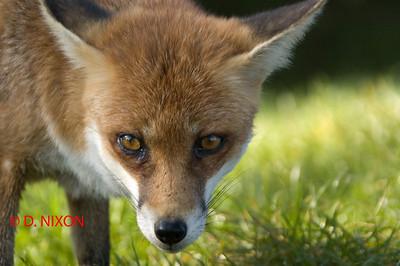 FOX 0313