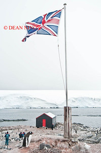 GENTOO PENGUIN SALUTES THE UNION JACK AT PORT LOCKROY - 0418