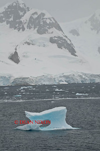 ICEBERG IN PARADISE HARBOUR - 0424