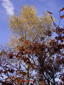 PARKHALL IN THE AUTUMN (FALL) 0135