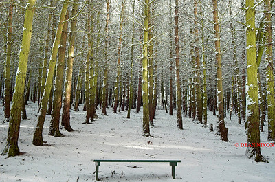 BENCH WITH SNOW 0169