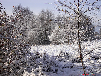SNOW AT PARKHALL COUNTRYSIDE PARK 0181