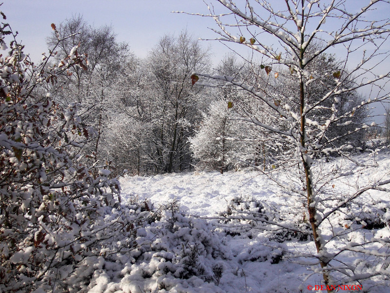 <b>SNOW AT PARKHALL COUNTRYSIDE PARK 0181</b>
