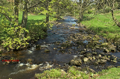 RIVER DOVE AT GRADBACH, DERBYSHIRE 0070