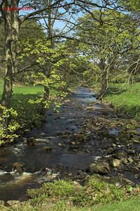 RIVER DOVE AT GRADBACH, DERBYSHIRE 0071