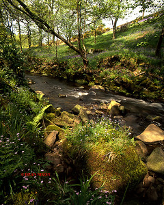 RIVER DANE AT GRADBACH 0226