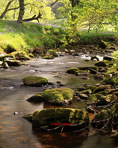 RIVER DANE AT GRADBACH 0227