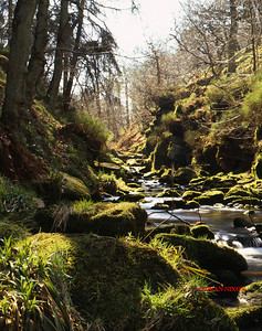 RIVER DANE AT GRADBACH 0258