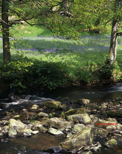 RIVER DANE AT GRADBACH 0259