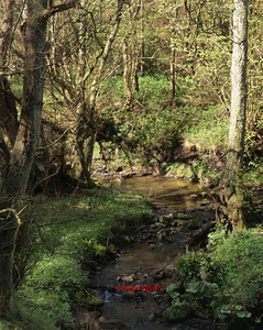 CONSALL WOOD - RIVER CHURNET 0240