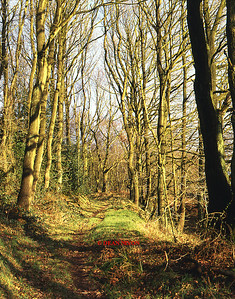 CHURNET VALLEY - CONSALL WOOD 0218