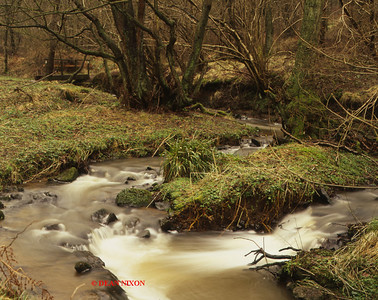 CONSALL WOOD - RIVER CHURNET 0237