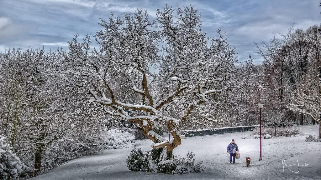 Abdijpark in de winter
