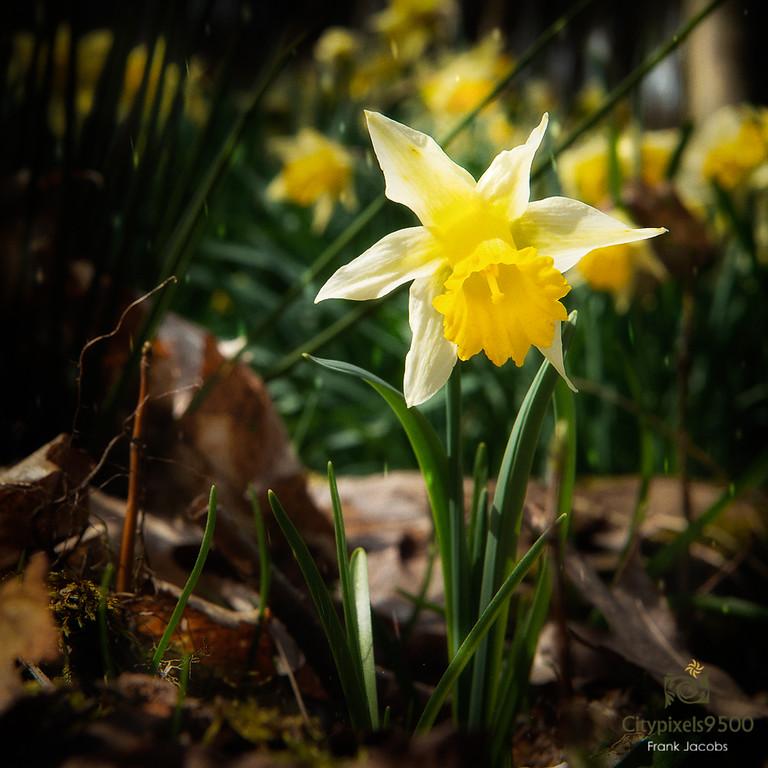 Bloemen op de Hoge Buizemont