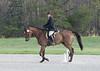 CRHC 2014 Pony Club Horse Trials-2185
