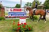DR Horse Show 6-2019-7937