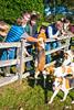 Deep Run Opening Hunt 2016 SIGAFOOS PHOTO-4738