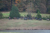 Fullstream Farm Hunt Oct 2012-8352