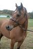 Fullstream Farm Hunt Oct 2012-0797