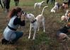Fullstream Farm Hunt Oct 2012-8266