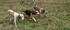 Fullstream Farm Hunt Oct 2012-0857