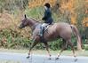Fullstream Farm Hunt Oct 2012-8414