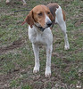DRHC Hunt from Kennels 3-17-2018-0252