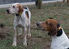 DRHC Hunt from Kennels 3-17-2018-0265