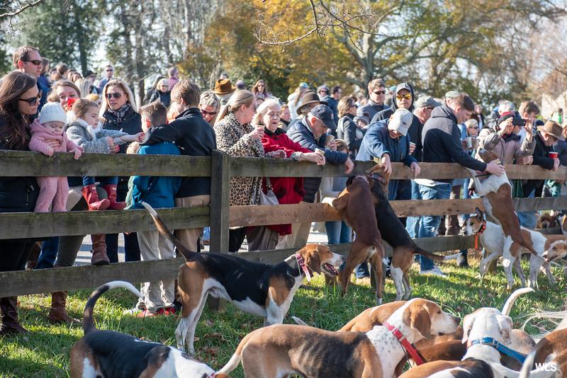 DRHC Thanksgiving  Hunt  2019-6596