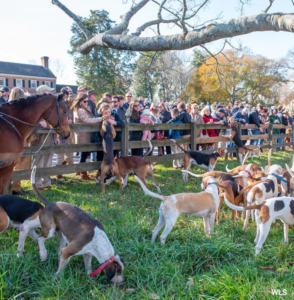 DRHC Thanksgiving  Hunt  2019-6586