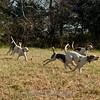 Deep Run Thanksgiving Hunt 2100-1194-2