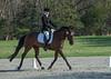 CRHC 2014 Pony Club Horse Trials-2268