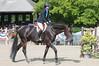 DRHC Horse Show USEF Premier 6-20-15-6330