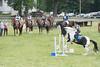 DRHC Jumper Derby 5-21-2017-653