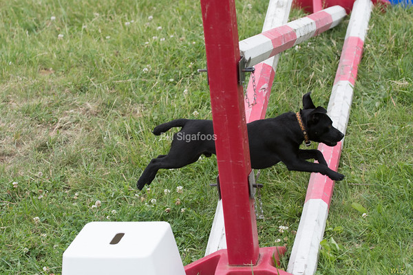 DRHC Jumper Derby  Oakdale, May 21 2017  FREE DOWNLOADS