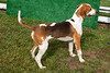 DR HOUNDS 6-2-2021-8382