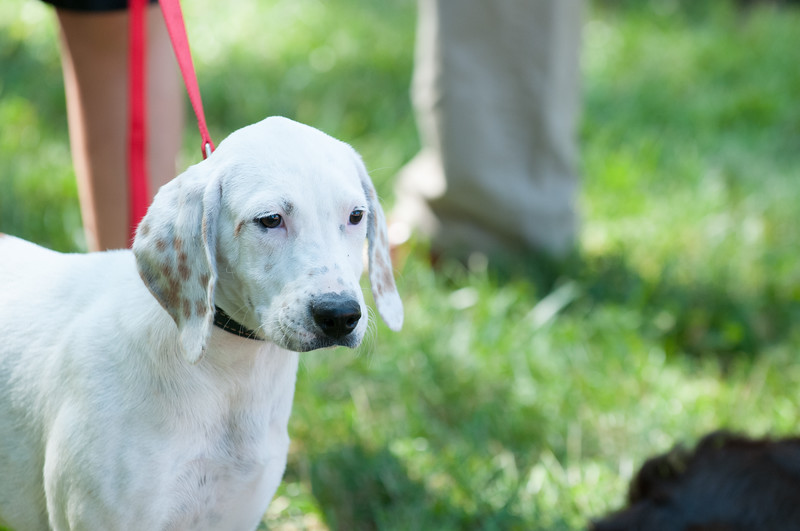 DRHC Dog Show 2012-5211