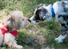 DRHC Dog Show 2012-5258