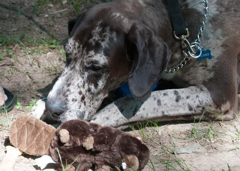 DRHC Dog Show 2012-5177