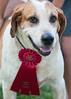 DRHC Dog Show 2012-5271