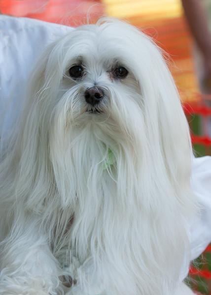 DRHC Dog Show 2012-