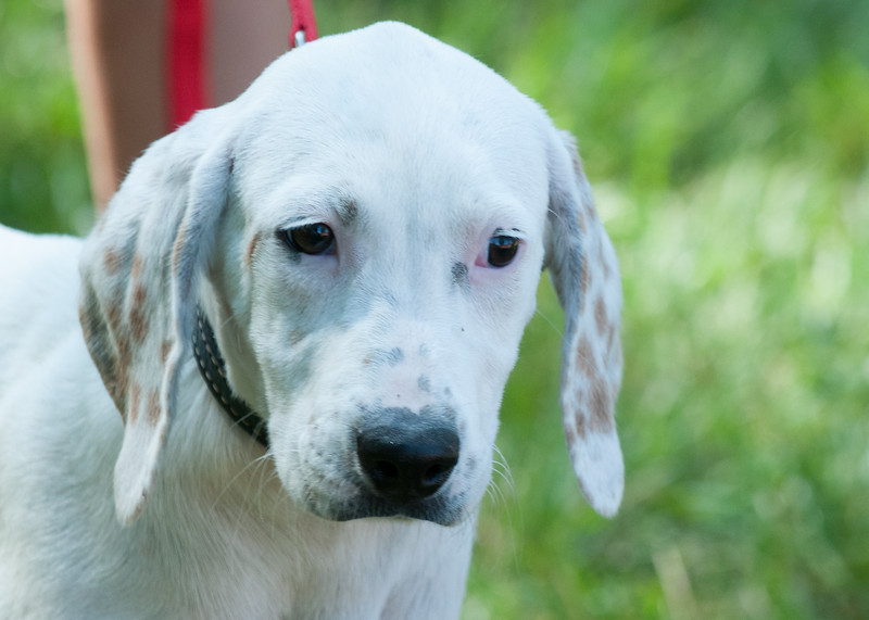 DRHC Dog Show 2012-5210