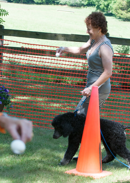 DRHC Dog Show 2012-5308