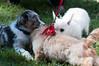 DRHC Dog Show 2012-5213