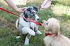 DRHC Dog Show 2012-5257